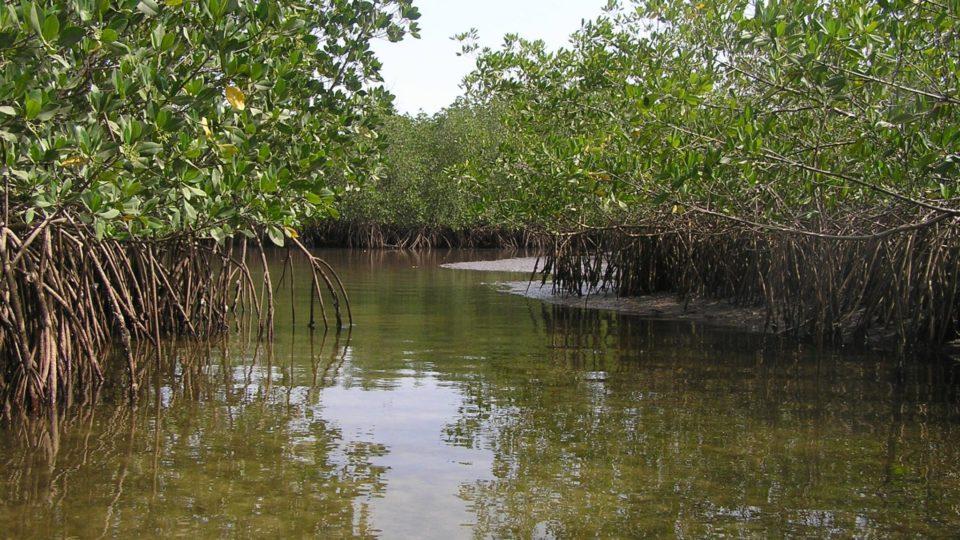 Coastal Wetlands and Mangroves